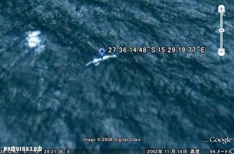 китообразных фото