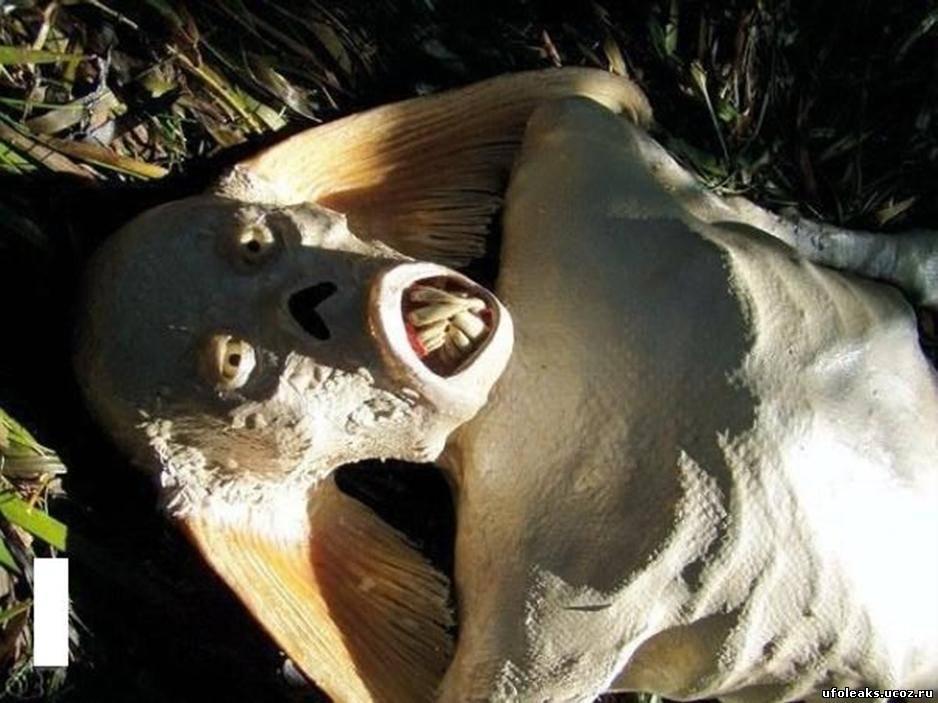 Голова мертвой русалки.